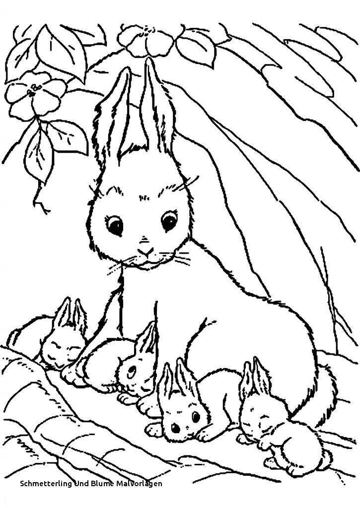 Schmetterling Mit Blume Zum Ausmalen Frisch Schmetterling Und Blume Malvorlagen 40 Kaninchen Ausmalbilder Zum Das Bild