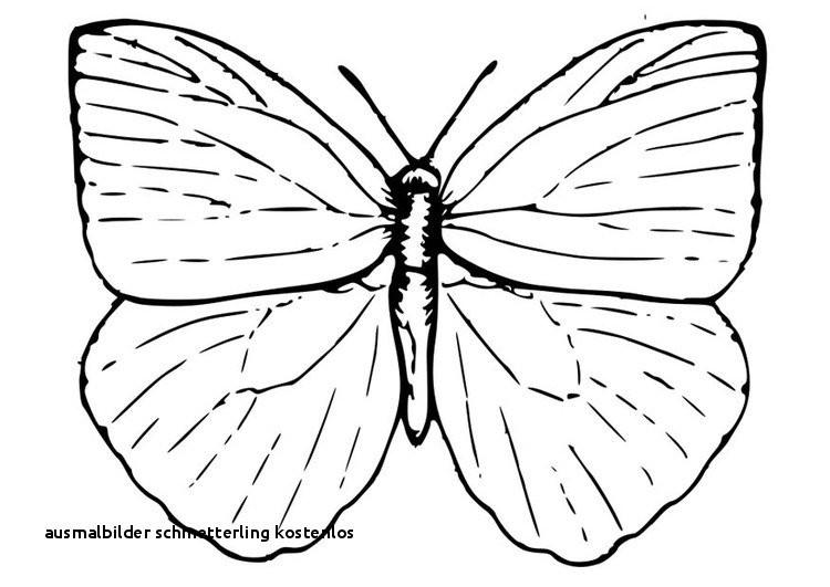 Schmetterling Mit Blume Zum Ausmalen Inspirierend Ausmalbilder Schmetterling Kostenlos Malvorlage A Book Coloring Fotos
