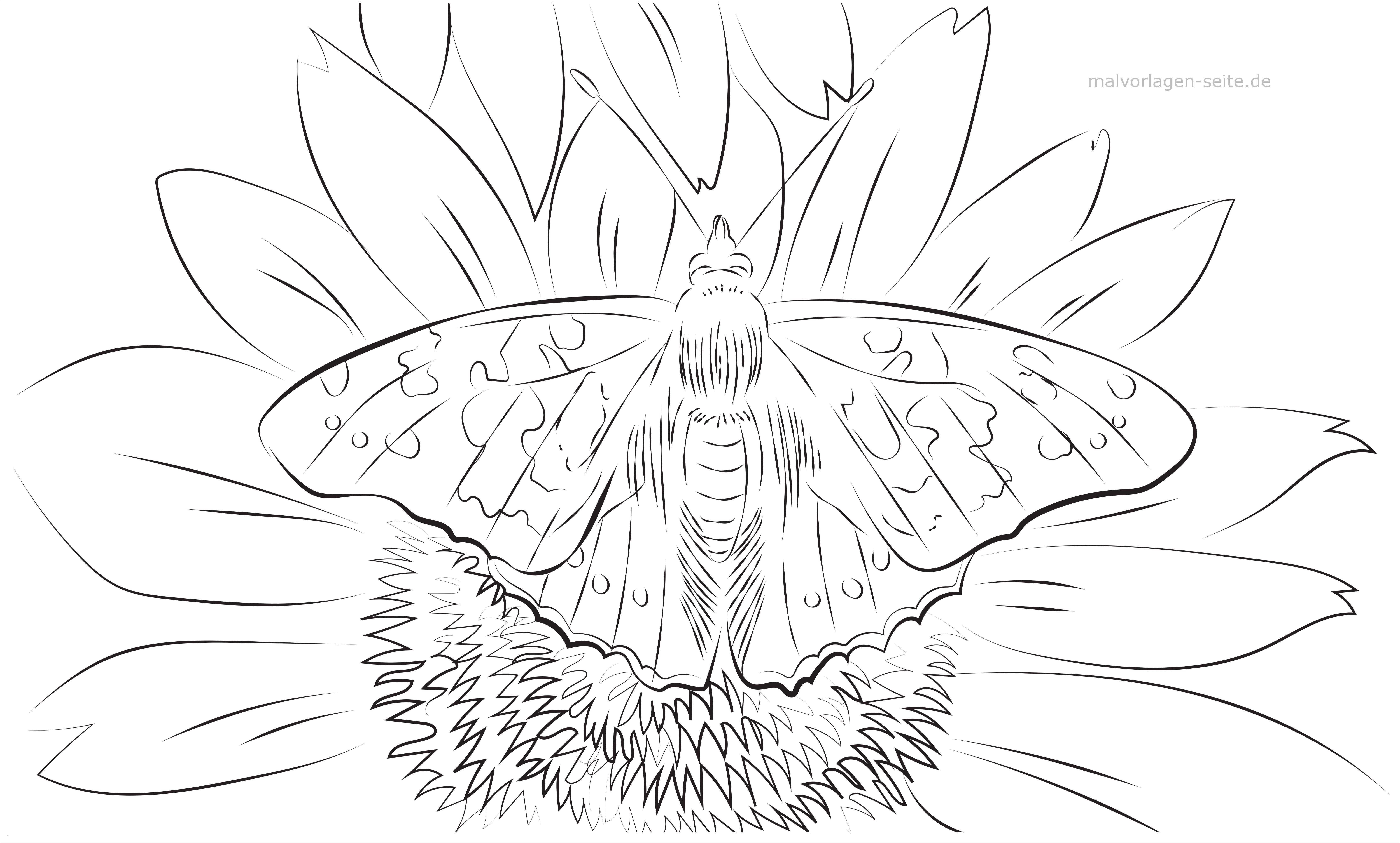 Schmetterling Mit Blume Zum Ausmalen Inspirierend Malvorlagen Schmetterlinge Blumen Bildnis Bayern Ausmalbilder Schön Bilder