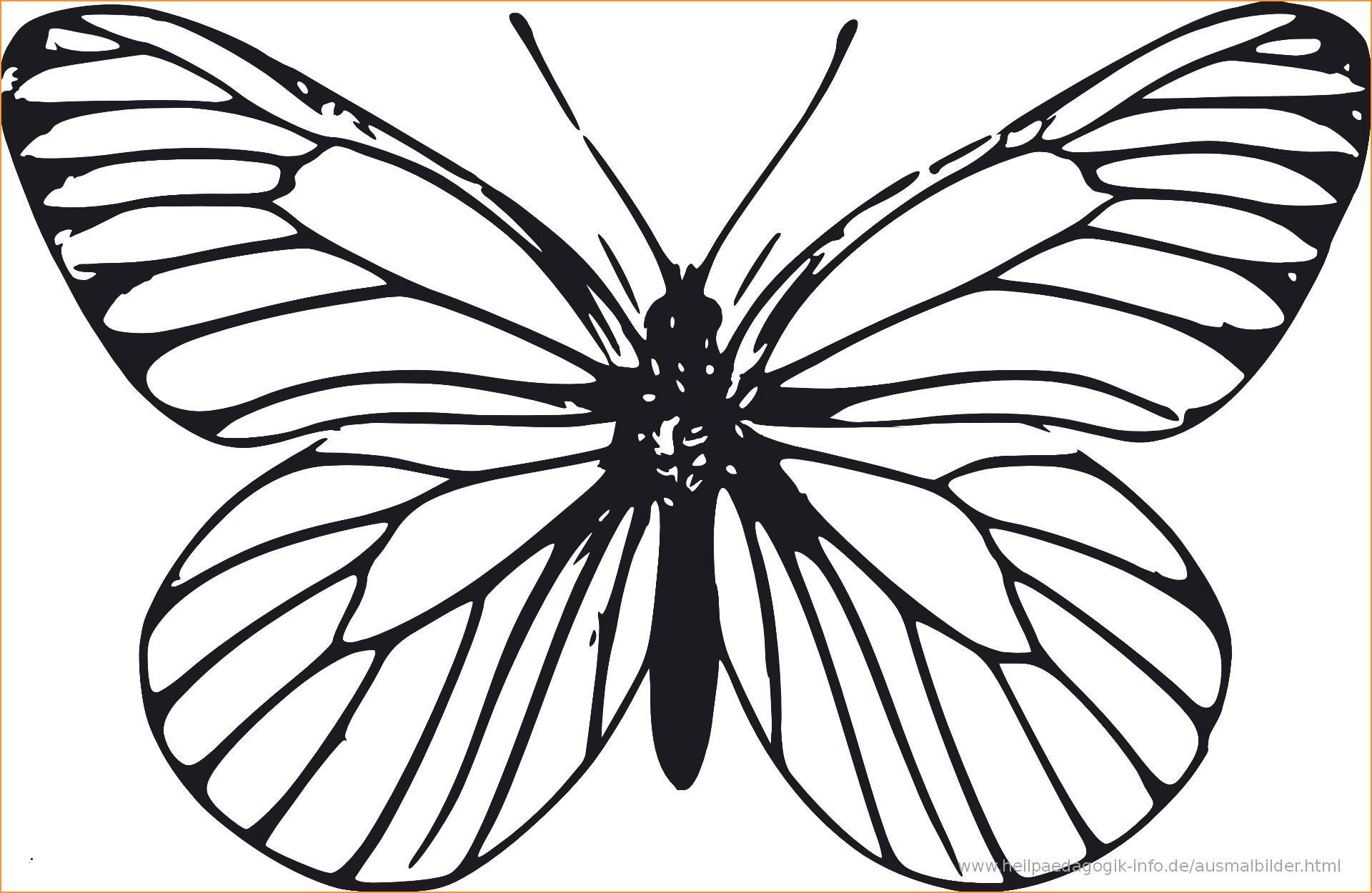 Schmetterlinge Bilder Zum Ausmalen Das Beste Von 40 Das Konzept Von Ausmalbilder Schmetterling Zum Ausdrucken Sammlung