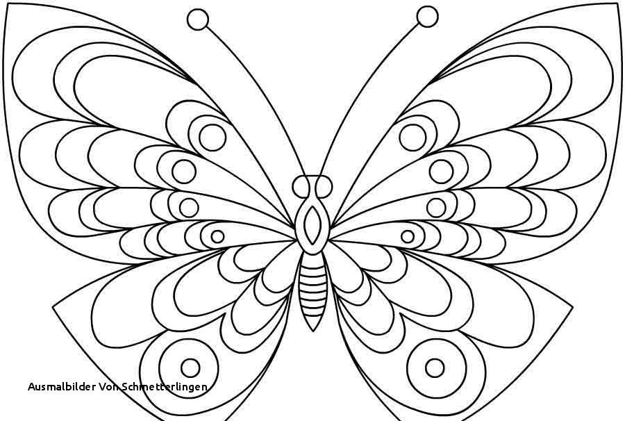 Schmetterlinge Bilder Zum Ausmalen Frisch Ausmalbilder Von Schmetterlingen Malvorlage Quark Genial Galerie