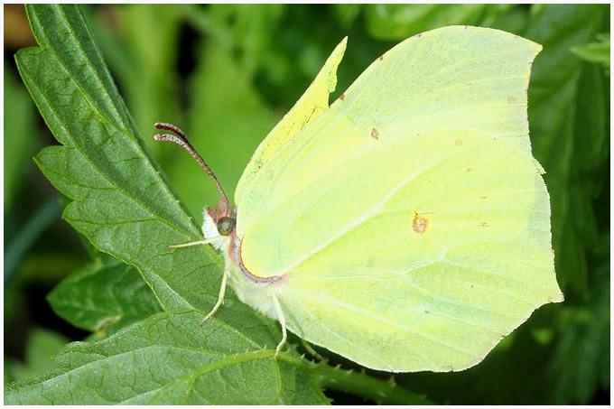Schmetterlinge Bilder Zum Ausmalen Frisch Schmetterlinge Zum Ausdrucken Gratis Einzigartig Cars 3 Ausmalbilder Galerie