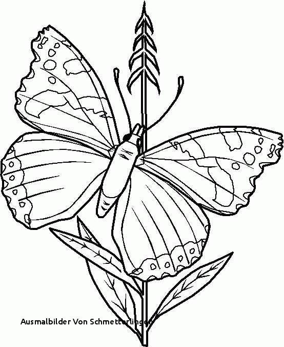 Schmetterlinge Bilder Zum Ausmalen Genial Ausmalbilder Von Schmetterlingen Schmetterlings Malvorlagen Genial Fotografieren