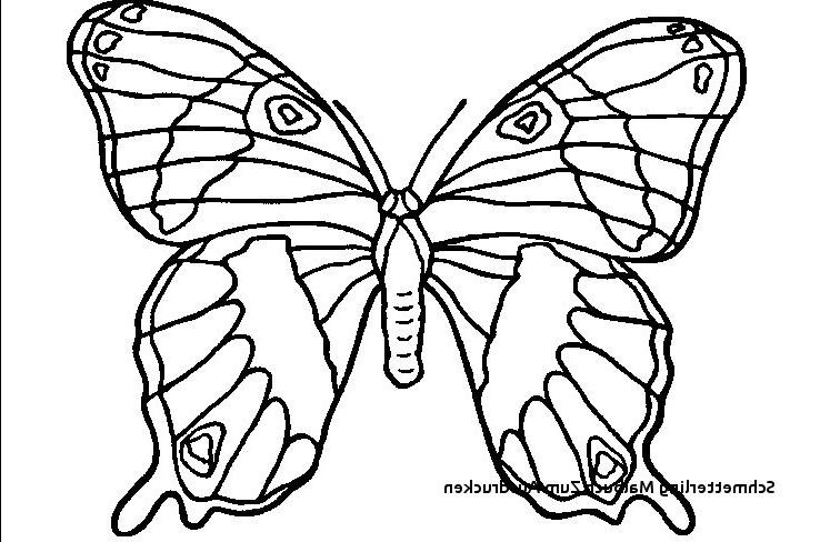 Schmetterlinge Bilder Zum Ausmalen Neu 22 Einzigartig Schmetterling Zum Ausmalen – Malvorlagen Ideen Sammlung