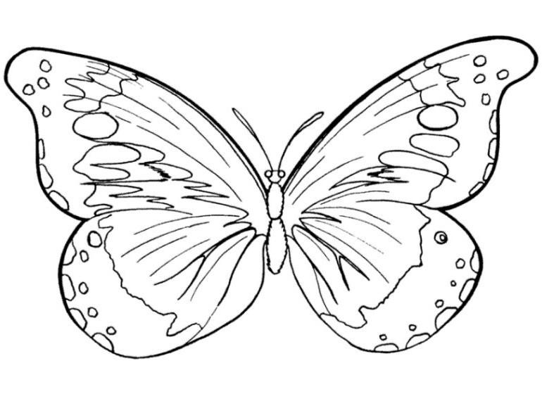Schmetterlinge Bilder Zum Ausmalen Neu 23 Elegant Schmetterlinge Ausmalbilder – Malvorlagen Ideen Fotografieren