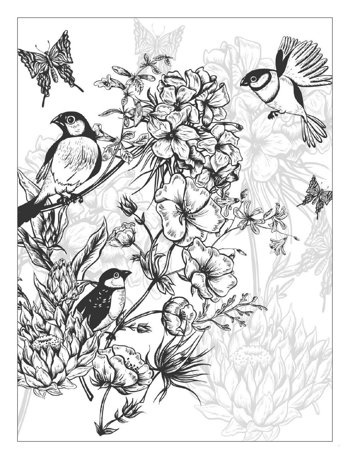 Schmetterlinge Bilder Zum Ausmalen Neu 23 Elegant Schmetterlinge Ausmalbilder – Malvorlagen Ideen Stock