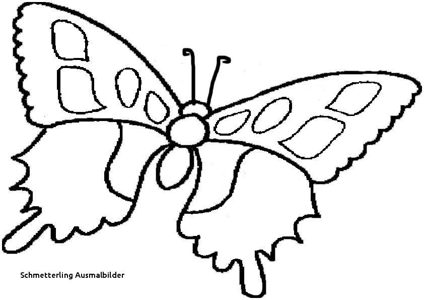 Schmetterlinge Bilder Zum Ausmalen Neu Schmetterling Ausmalbilder Malvorlage A Book Coloring Pages Best sol Das Bild