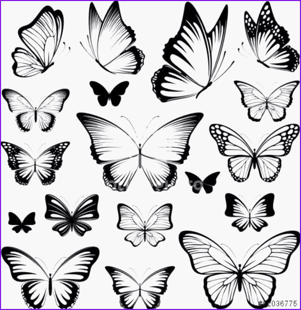 99 Einzigartig Schmetterlinge Zum Ausdrucken Gratis Fotografieren