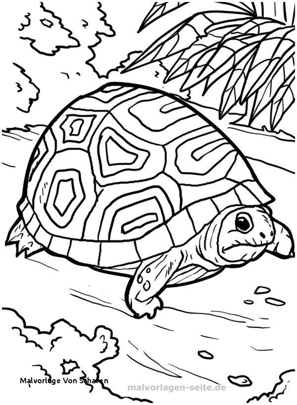 Shaun Das Schaf Ausmalbild Das Beste Von Malvorlage Von Schafen Ausmalbilder Malvorlage Schildkröte A Fotografieren