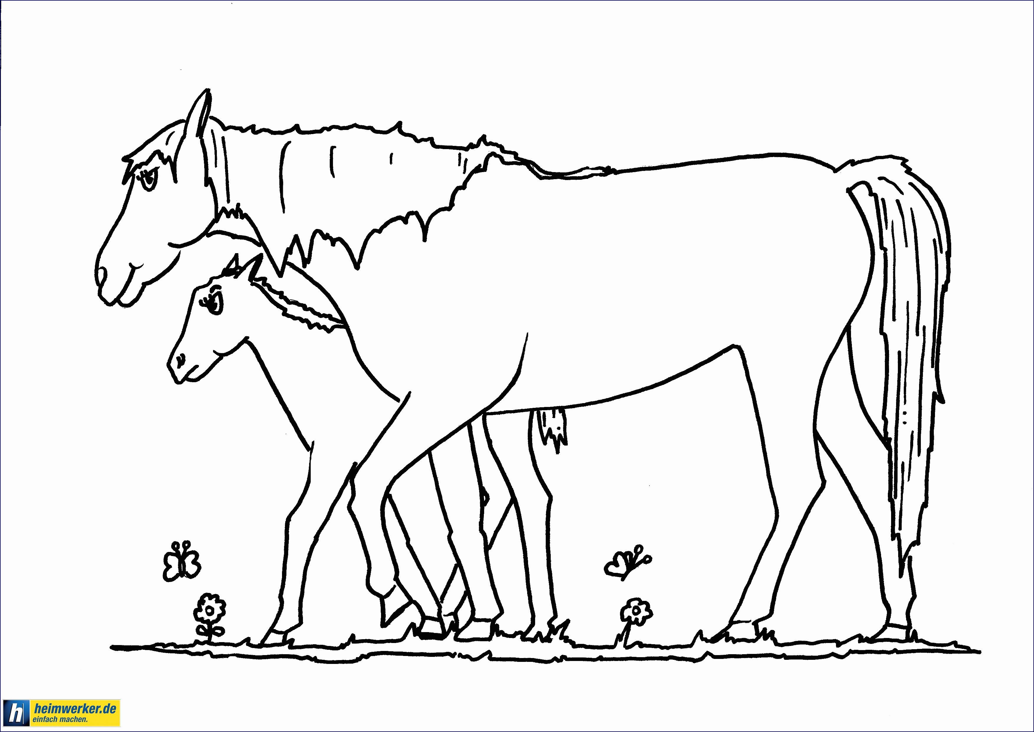 Shaun Das Schaf Ausmalbild Genial 30 Pferde Ausmalbilder Drucken forstergallery Bild