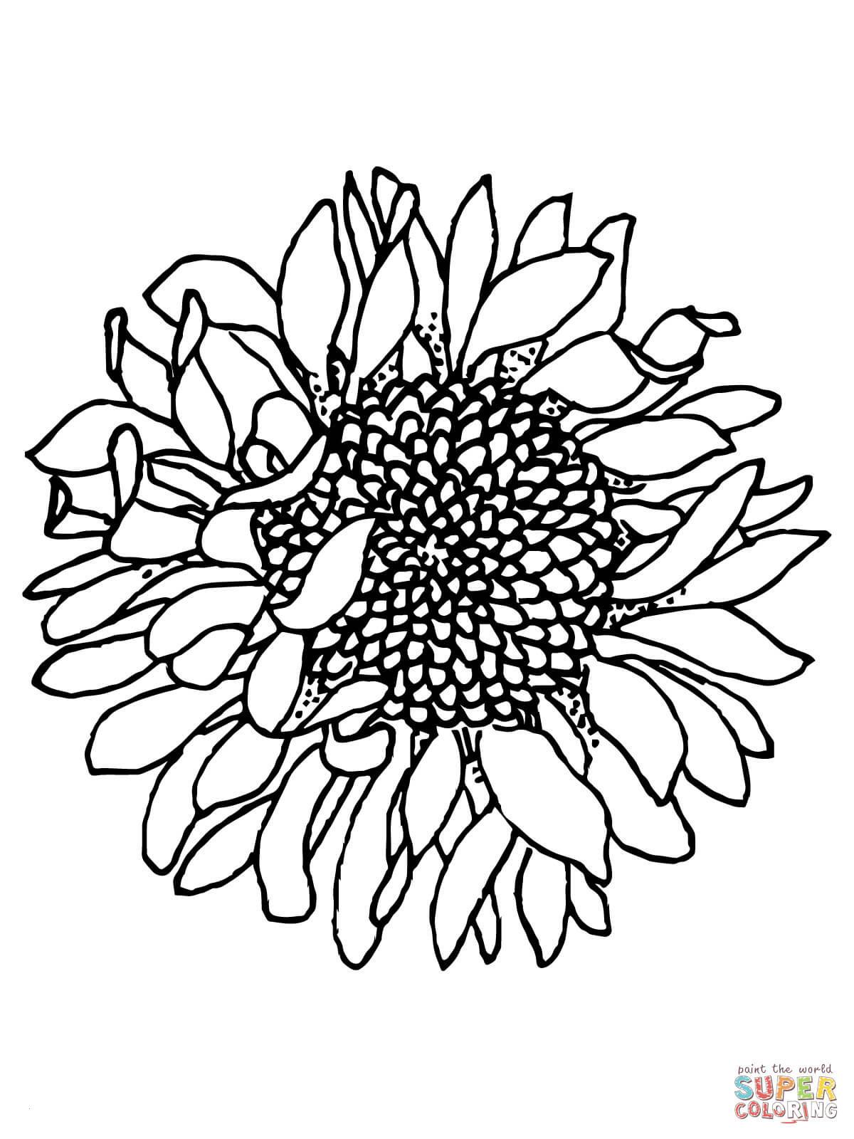 sonnenblume malvorlagen kostenlos frisch ausmalbilder