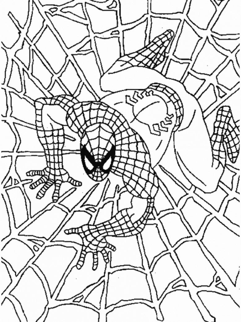 Spiderman Bilder Zum Ausmalen Neu Ausmalbild Spiderman 34 Malvorlage Spiderman Ausmalbilder Kostenlos Galerie