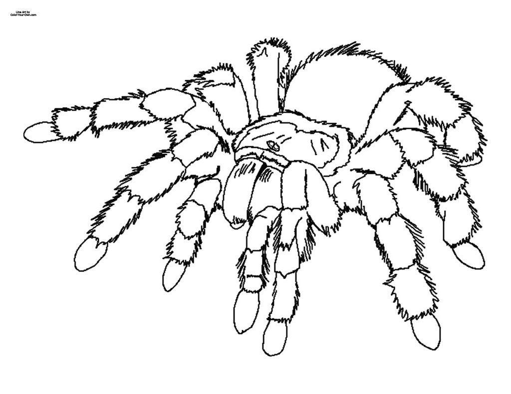 Spinnennetz Mit Spinne Malvorlage Einzigartig Halloween Malvorlagen Katze In Einem Hut Halloween Kürbis Galerie