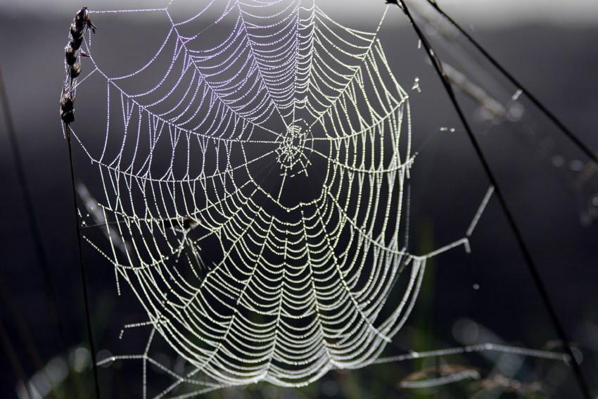 Spinnennetz Mit Spinne Malvorlage Frisch Spinnennetz Fotos