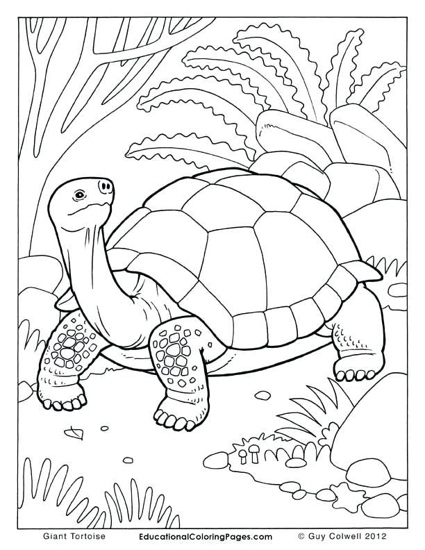 Super Wings Coloring Pages Das Beste Von Monumentaleye Popping Coloring Pages Super Wings Easy Coloring Pages Das Bild