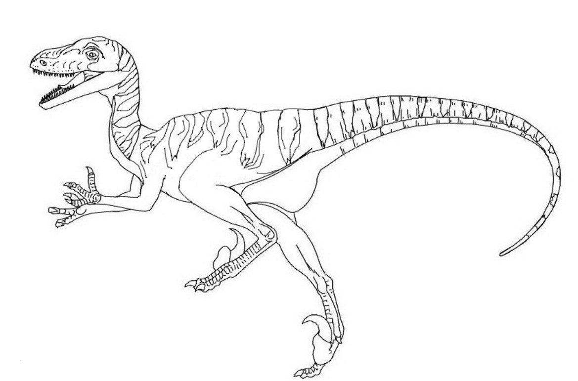 T Rex Malvorlage Genial Velociraptor Dino Ausmalbilder Zum Ausdrucken E Genial Dinosaurier Sammlung