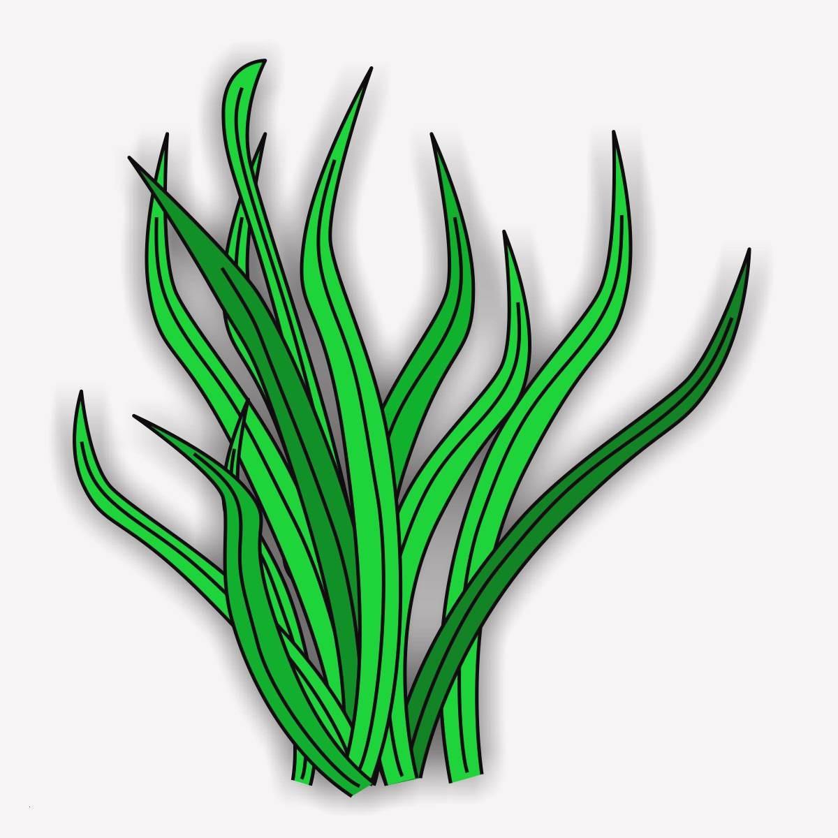 unterwasserpflanzen zum ausmalen genial ausmalbilder