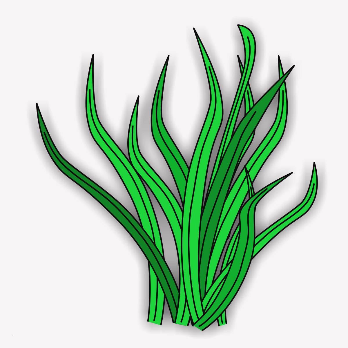 Unterwasserpflanzen Zum Ausmalen Genial 25 Genial Ausmalbilder Ninjago Geister Stock