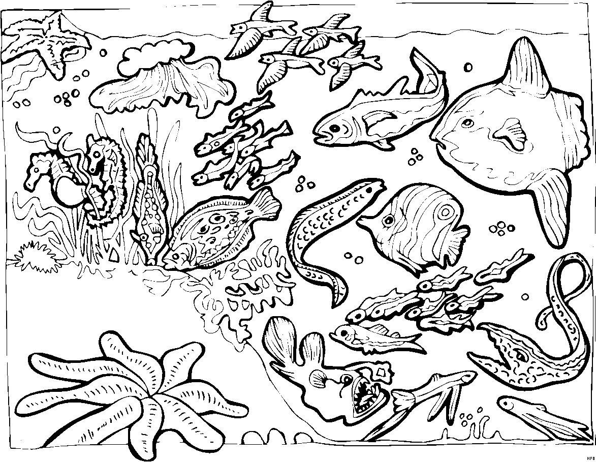 Unterwasserwelt Zum Ausmalen Einzigartig 35 Malvorlagen Unterwassertiere Scoredatscore Schön Unterwasserwelt Stock