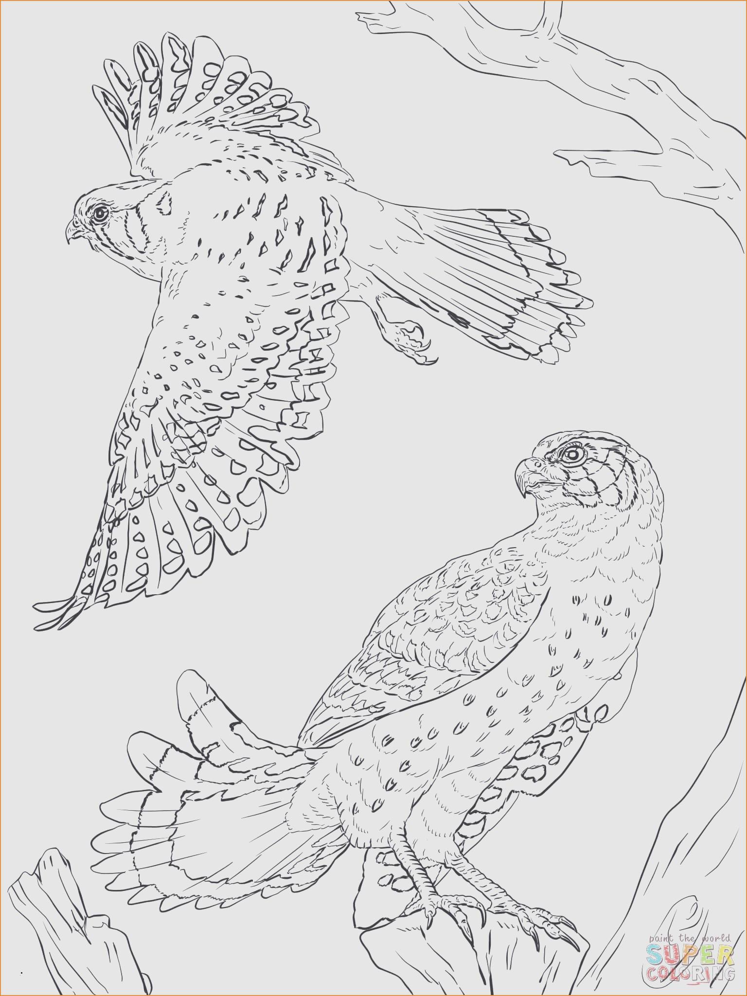 Unterwasserwelt Zum Ausmalen Einzigartig 36 Motiv Jaguar Ausmalbilder Treehouse Nyc Stock