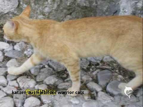 Warrior Cats Ausmalbilder Das Beste Von 25 Katzen Ausmalbilder Warrior Cats Colorprint Sammlung