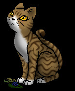 Warrior Cats Ausmalbilder Neu Warrior Cats Wiki Character Art Archiv 1 2013 Stock