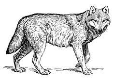 Wolf Bilder Zum Ausmalen Das Beste Von 118 Besten Ausmalbilder Bilder Auf Pinterest In 2018 Fotografieren