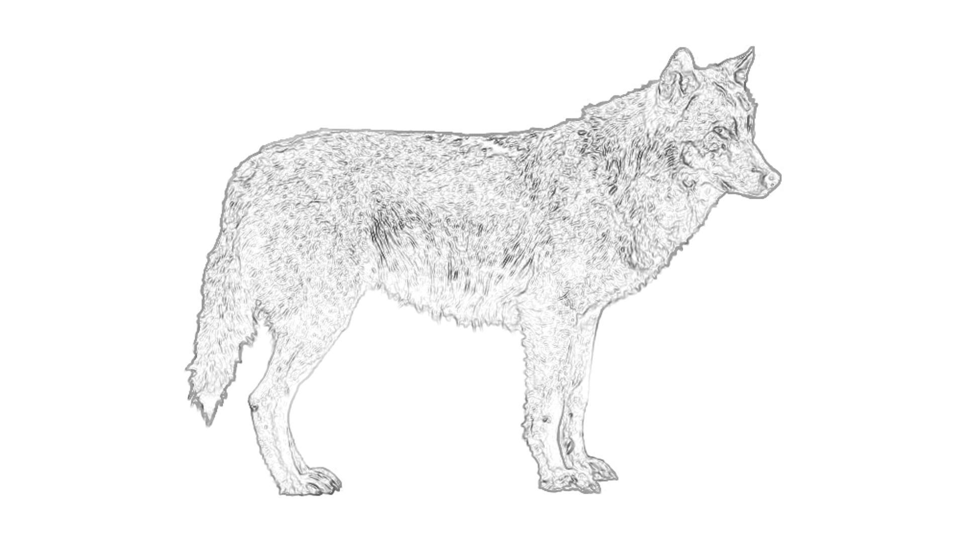 Wolf Bilder Zum Ausmalen Das Beste Von Wolf Ausmalbilder Awesome Yoda Ausmalbilder Uploadertalk Beste Das Bild