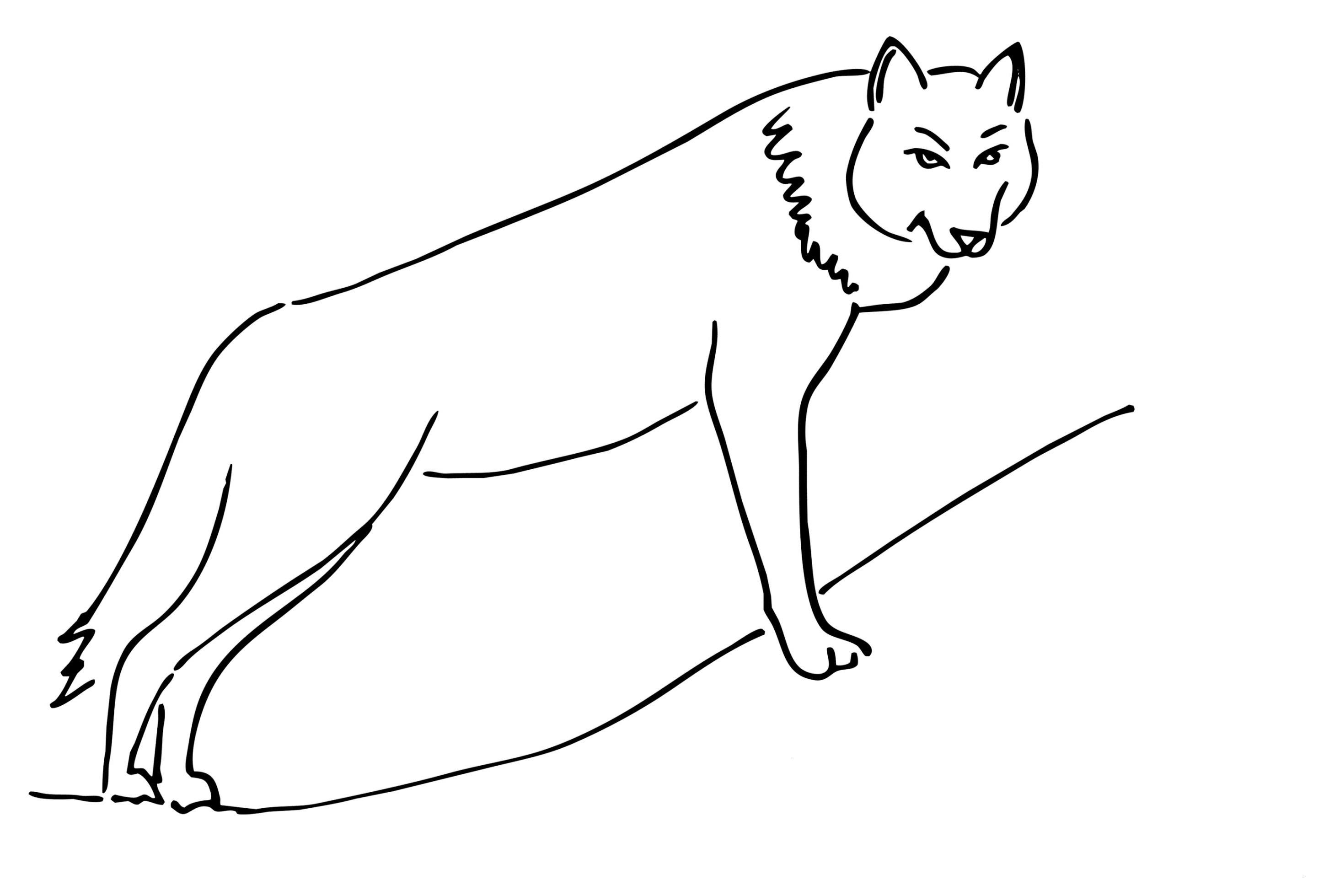 Wolf Bilder Zum Ausmalen Einzigartig 35 Fantastisch Ausmalbilder