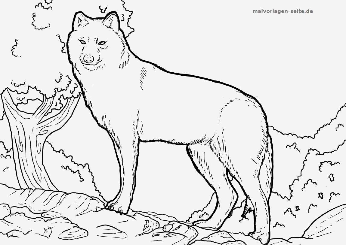 Wolf Bilder Zum Ausmalen Einzigartig Bildergalerie & Bilder Zum Ausmalen Ausmalbild Regenbogen Fotos