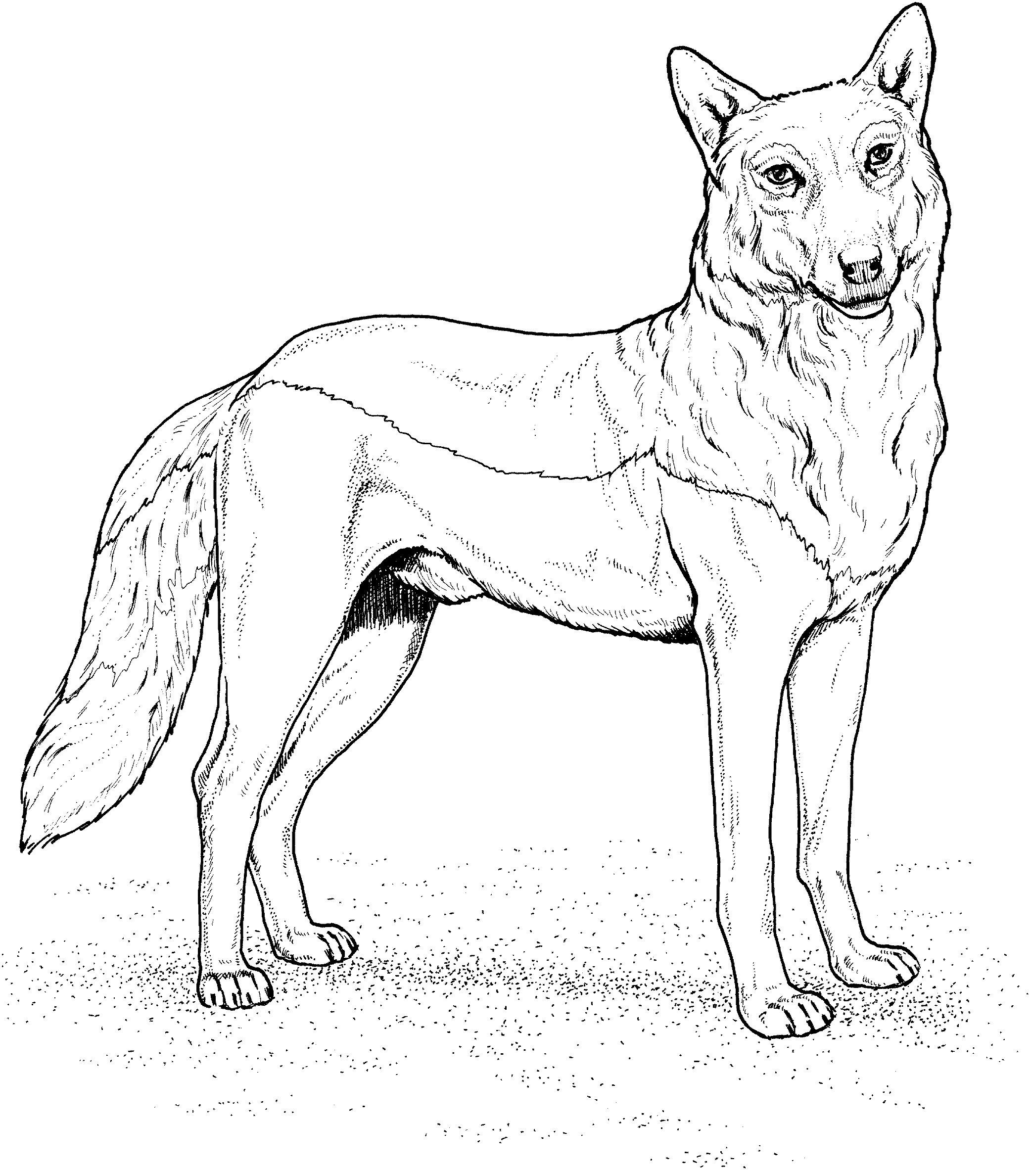 Wolf Bilder Zum Ausmalen Einzigartig Wolf Ausmalbilder Schön Wolf Malvorlagen Frisch Malvorlagen Fur Bild
