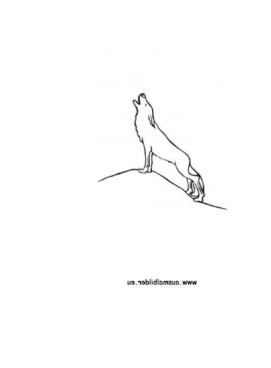 Wolf Bilder Zum Ausmalen Frisch 25 Schön Ausmalbilder Wolf – Malvorlagen Ideen Bilder
