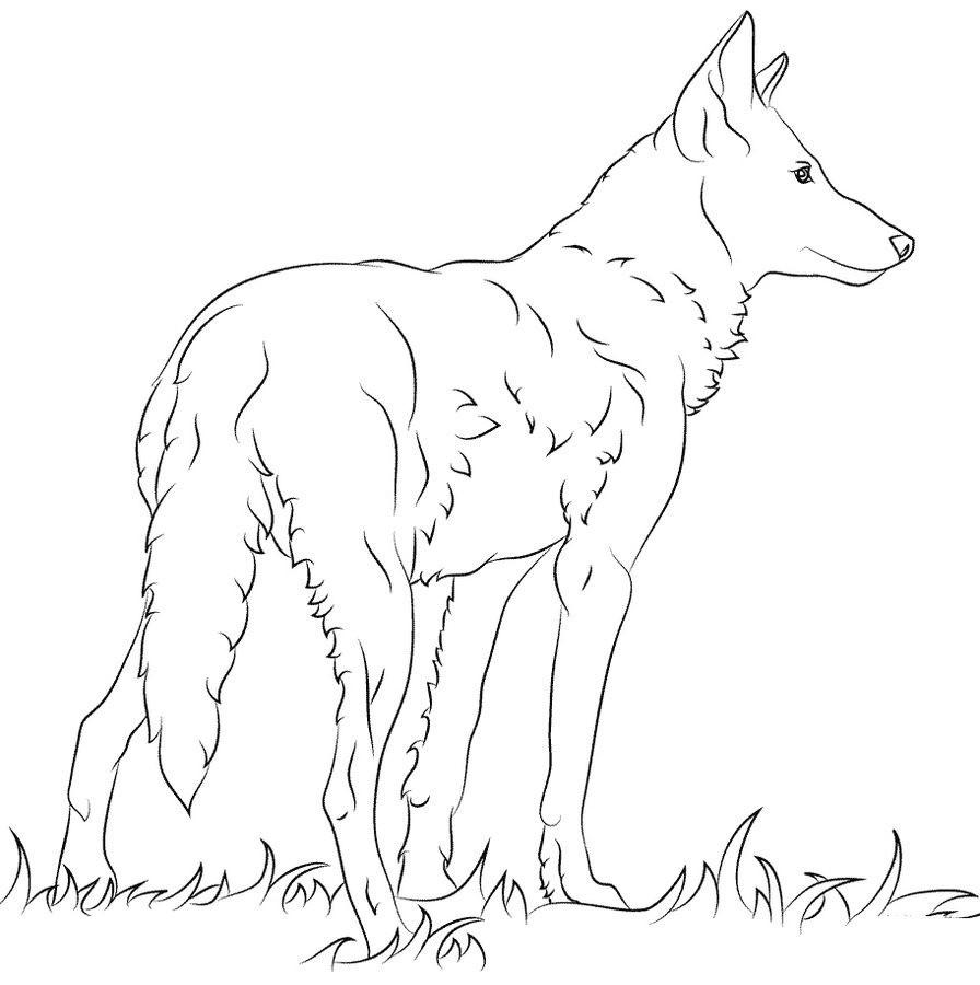 Wolf Bilder Zum Ausmalen Frisch Wolf Malvorlagen Schön Malvorlagen Fur Kinder Ausmalbilder Wolf Das Bild