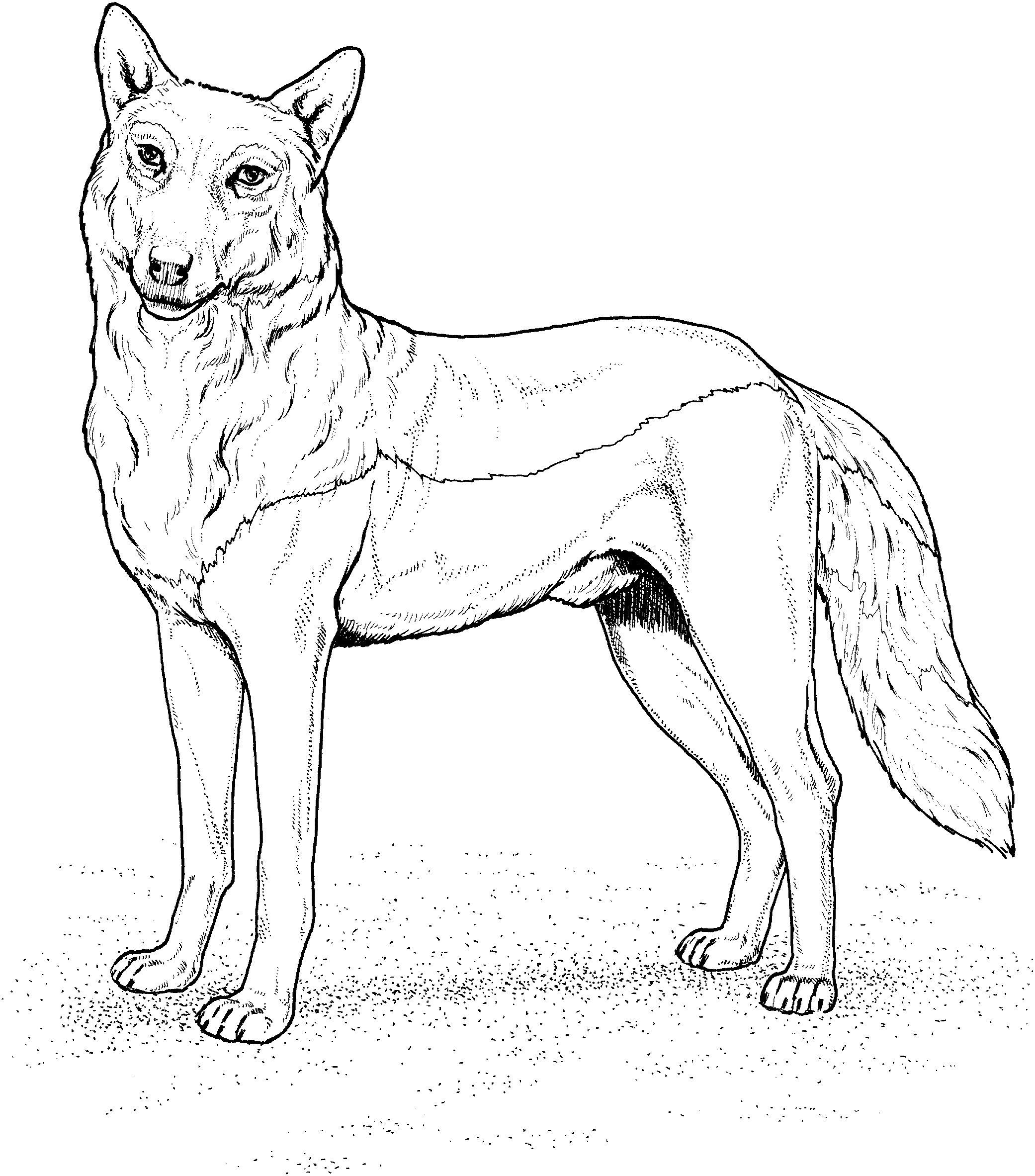 Wolf Bilder Zum Ausmalen Genial 32 Fantastisch Ausmalbild Wolf – Malvorlagen Ideen Fotografieren