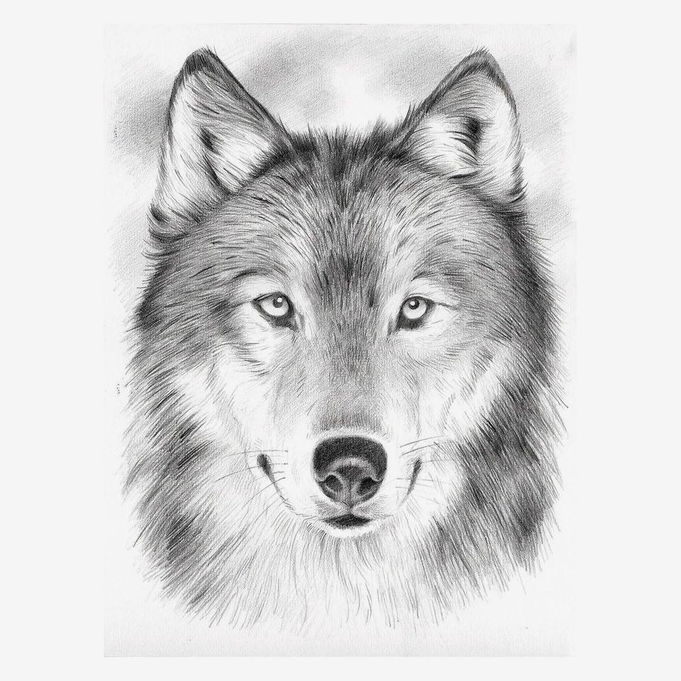 Wolf Bilder Zum Ausmalen Genial Beispielbilder Färben Malvorlagen Malen Nach Zahlen Sammlung