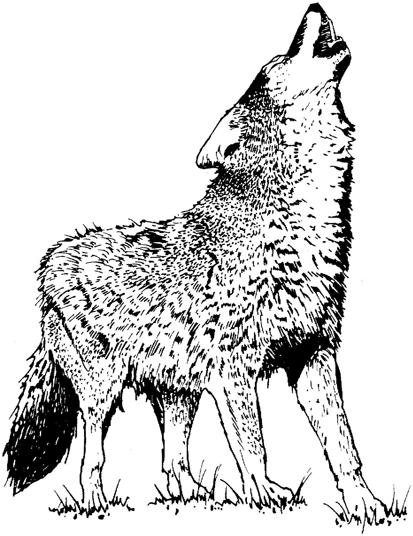Wolf Bilder Zum Ausmalen Genial Wolf Malvorlagen Schön Malvorlagen Fur Kinder Ausmalbilder Wolf Bild