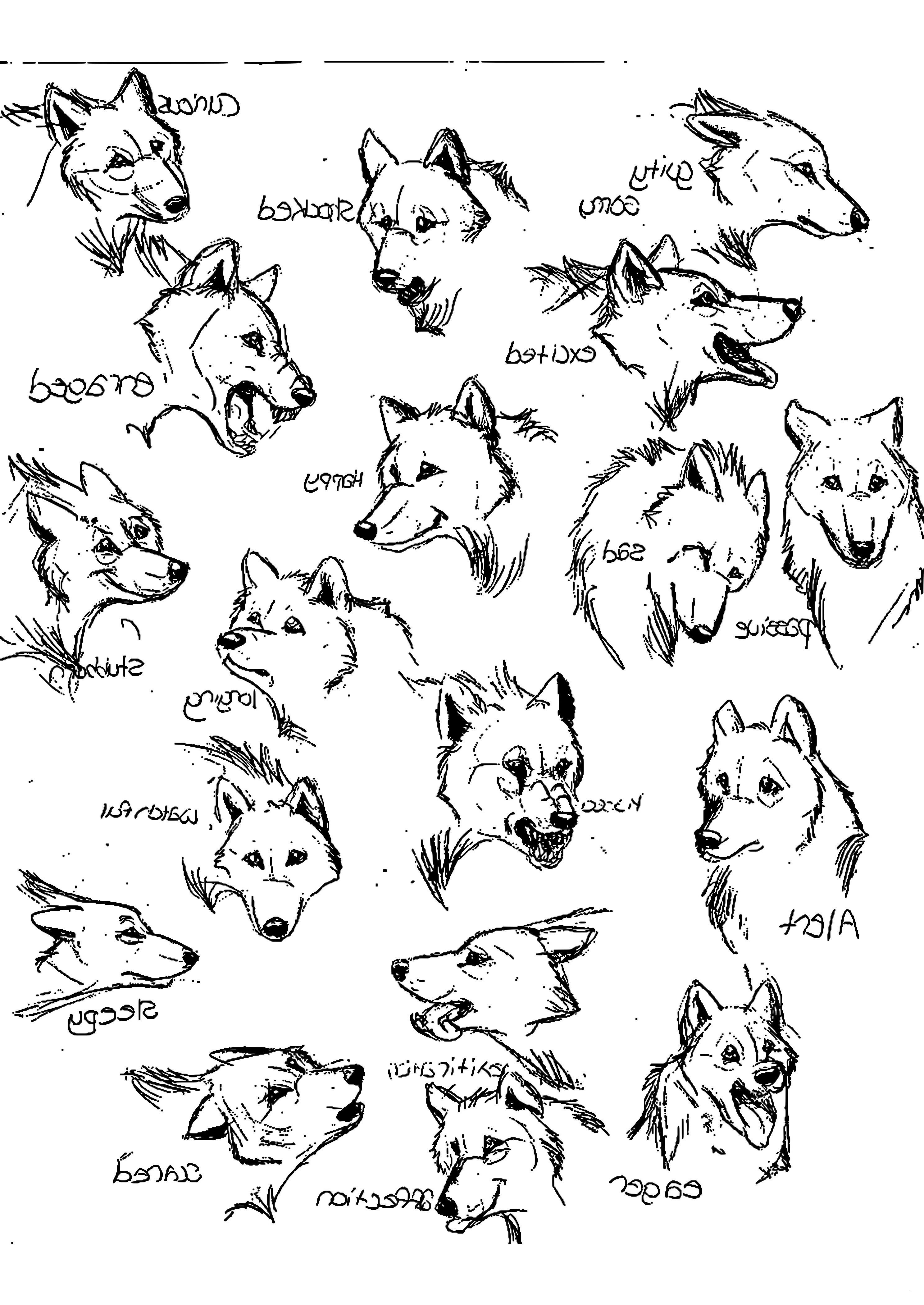 Wolf Bilder Zum Ausmalen Das Beste Von 35 Fantastisch Ausmalbilder