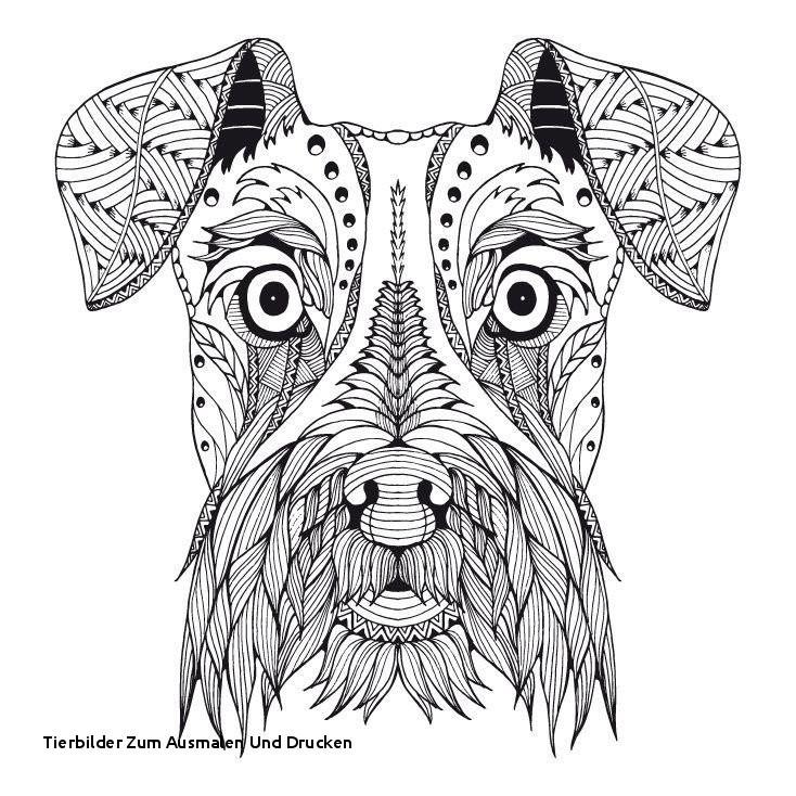 Wolf Bilder Zum Ausmalen Neu Tierbilder Zum Ausmalen Und Drucken Inspirierende Malvorlagen 60 Bild