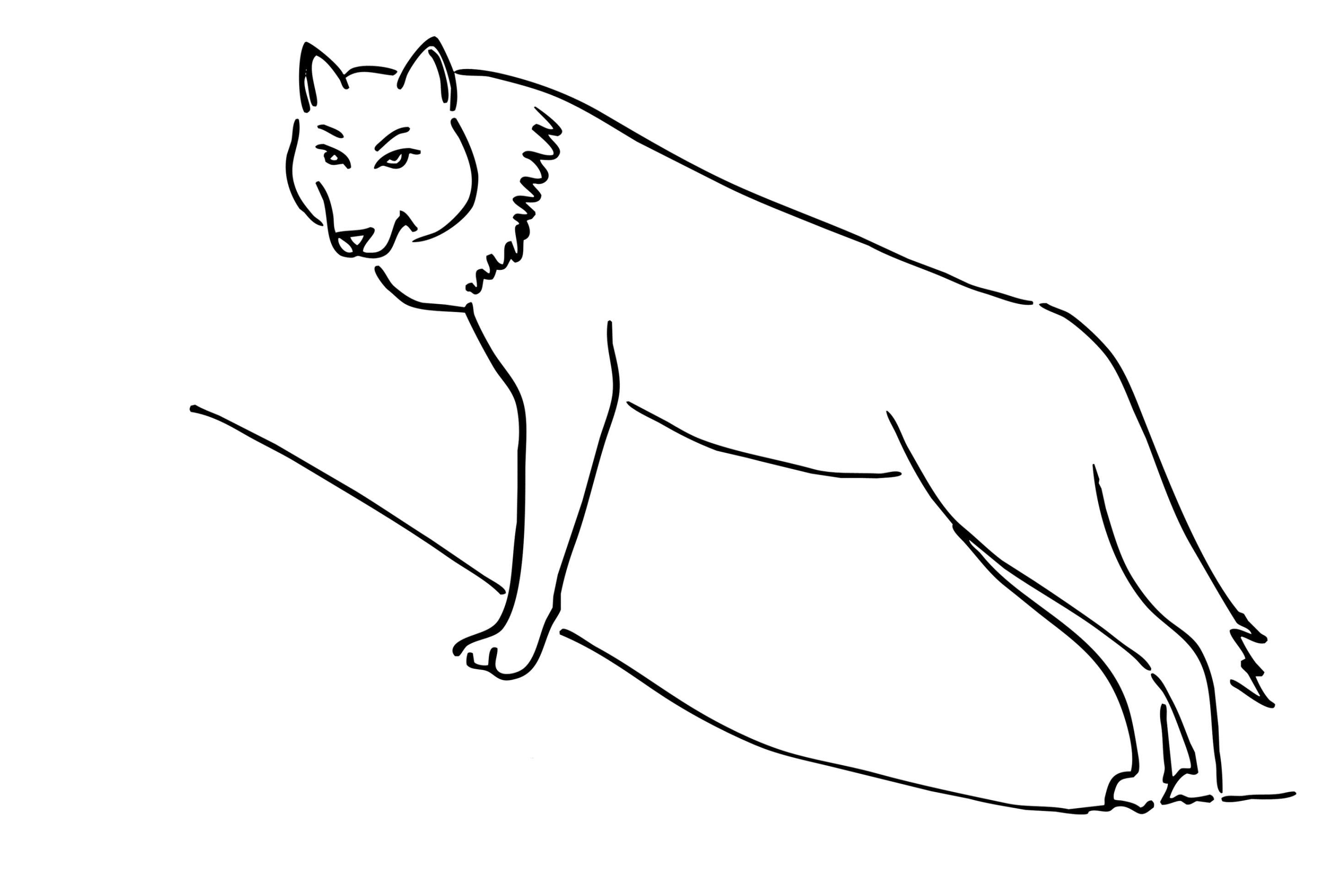 Wolf Bilder Zum Ausmalen Neu Wolf Malvorlagen Schön Malvorlagen Fur Kinder Ausmalbilder Wolf Das Bild