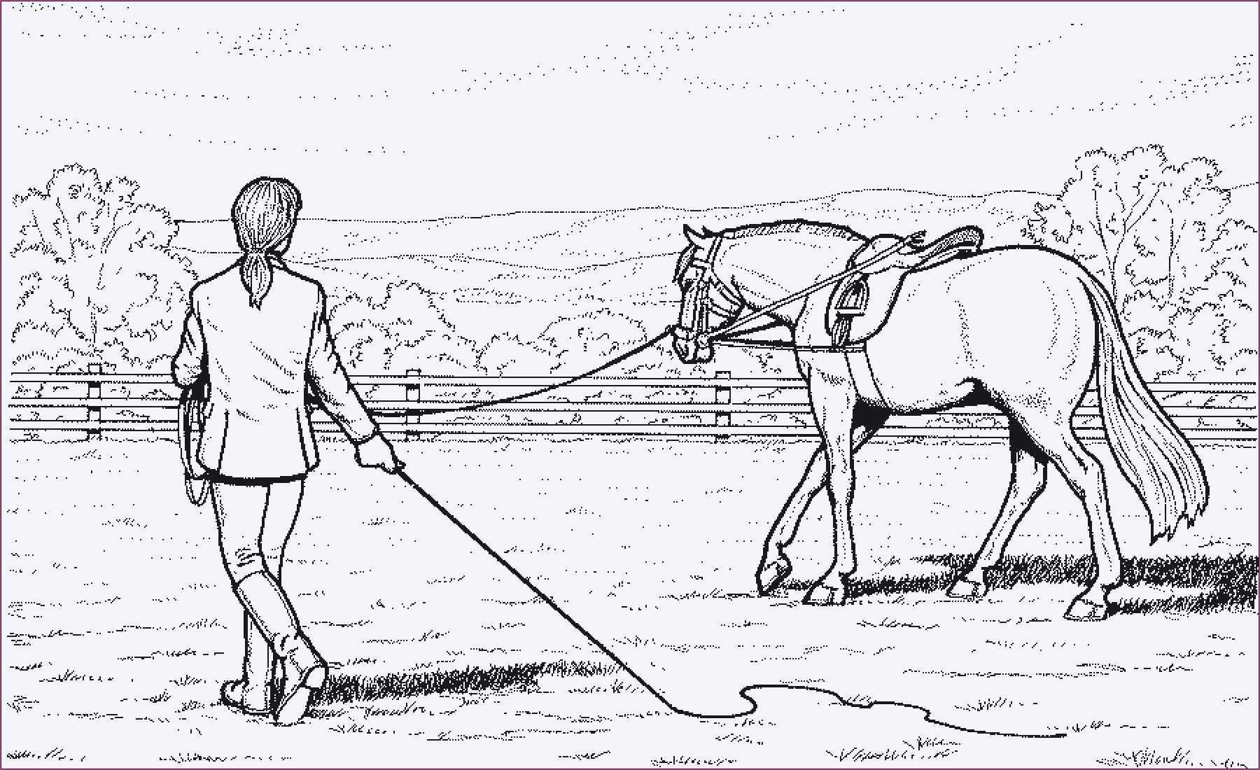 Ausmalbilder Barbie Pferd Frisch Pferde Ausmalbilder Horseland Galerie