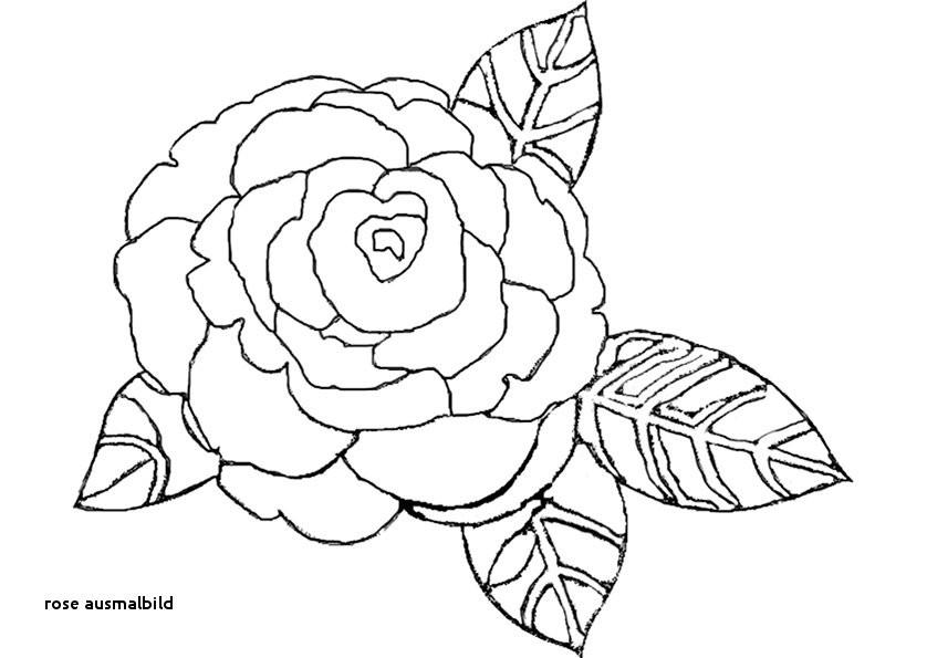 Ausmalbilder Rosen Mit Herz Das Beste Von Bilder Zum Ausmalen Rosen élégant Graphie Rose Ausmalbild Sammlung