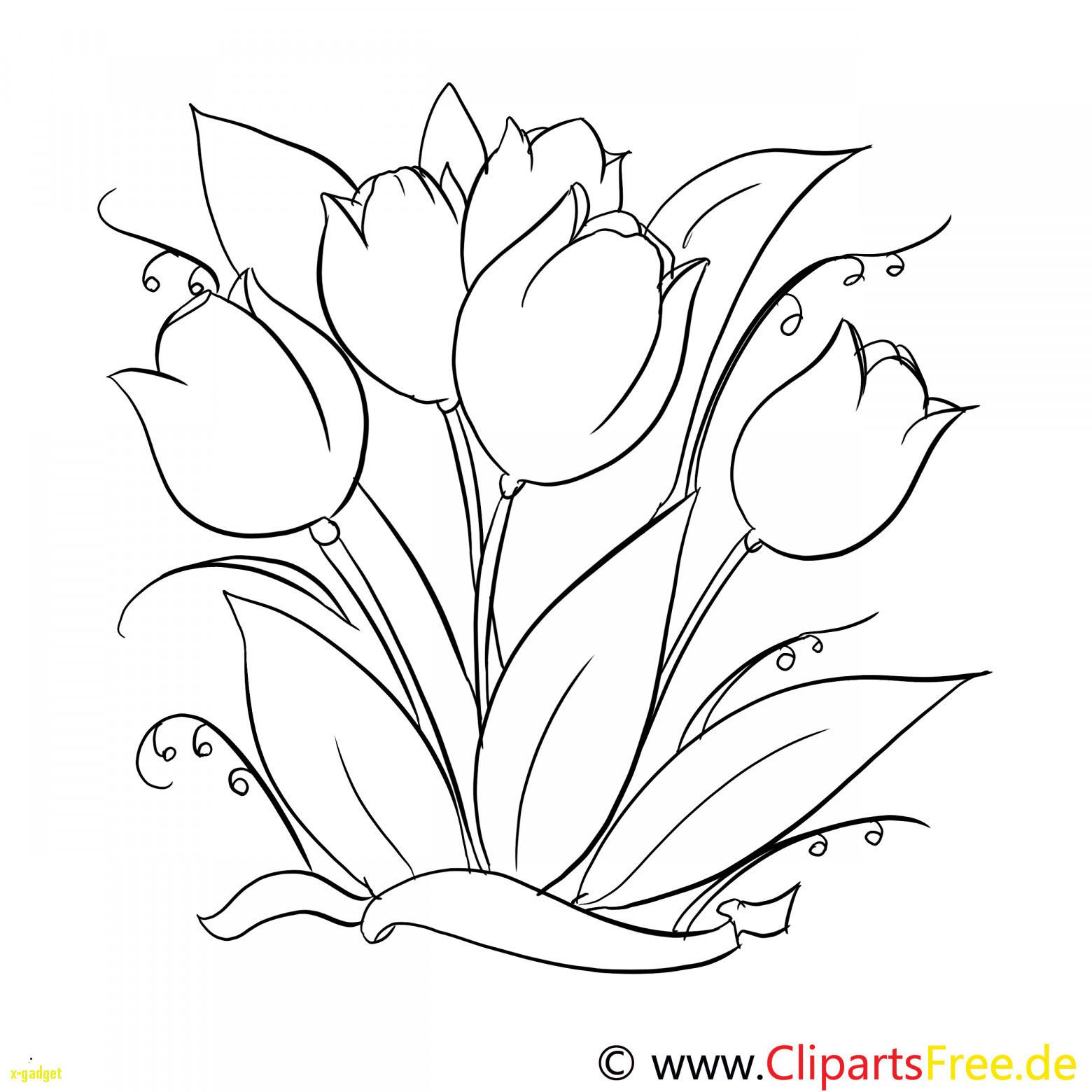 Ausmalbilder Rosen Mit Herz Das Beste Von Malvorlagen Blumen Rosen Unique Graphie Ausmalbilder Blumen Fotografieren