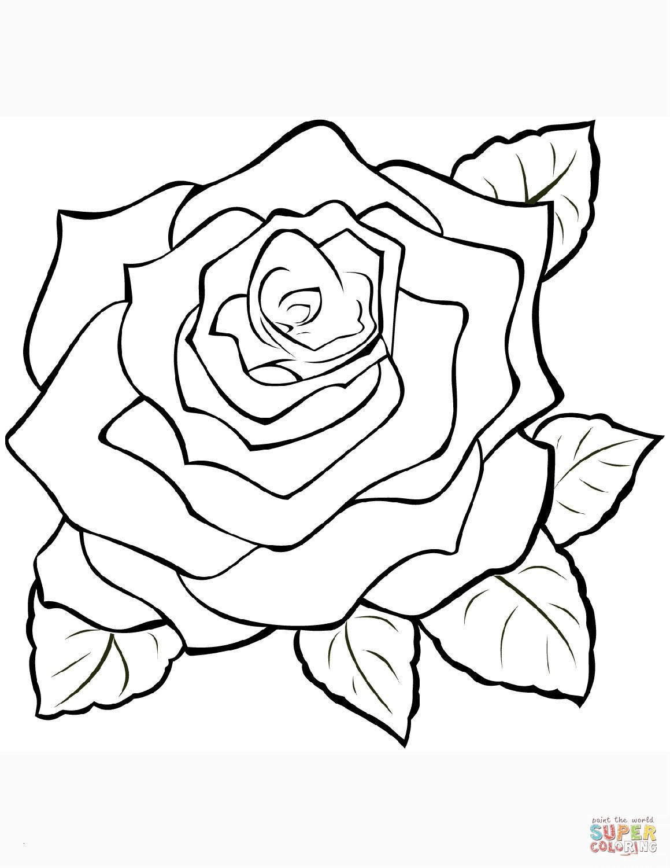 Ausmalbilder Rosen Mit Herz Einzigartig Malvorlage Rose Das Beste Von 40 Ausmalbilder Rosen Scoredatscore Das Bild