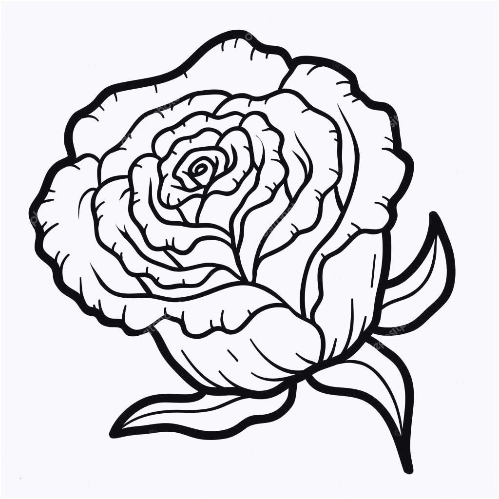 Ausmalbilder Rosen Mit Herz Frisch 78 Beau Galerie De Bilder Zum Ausmalen Rosen Fotografieren