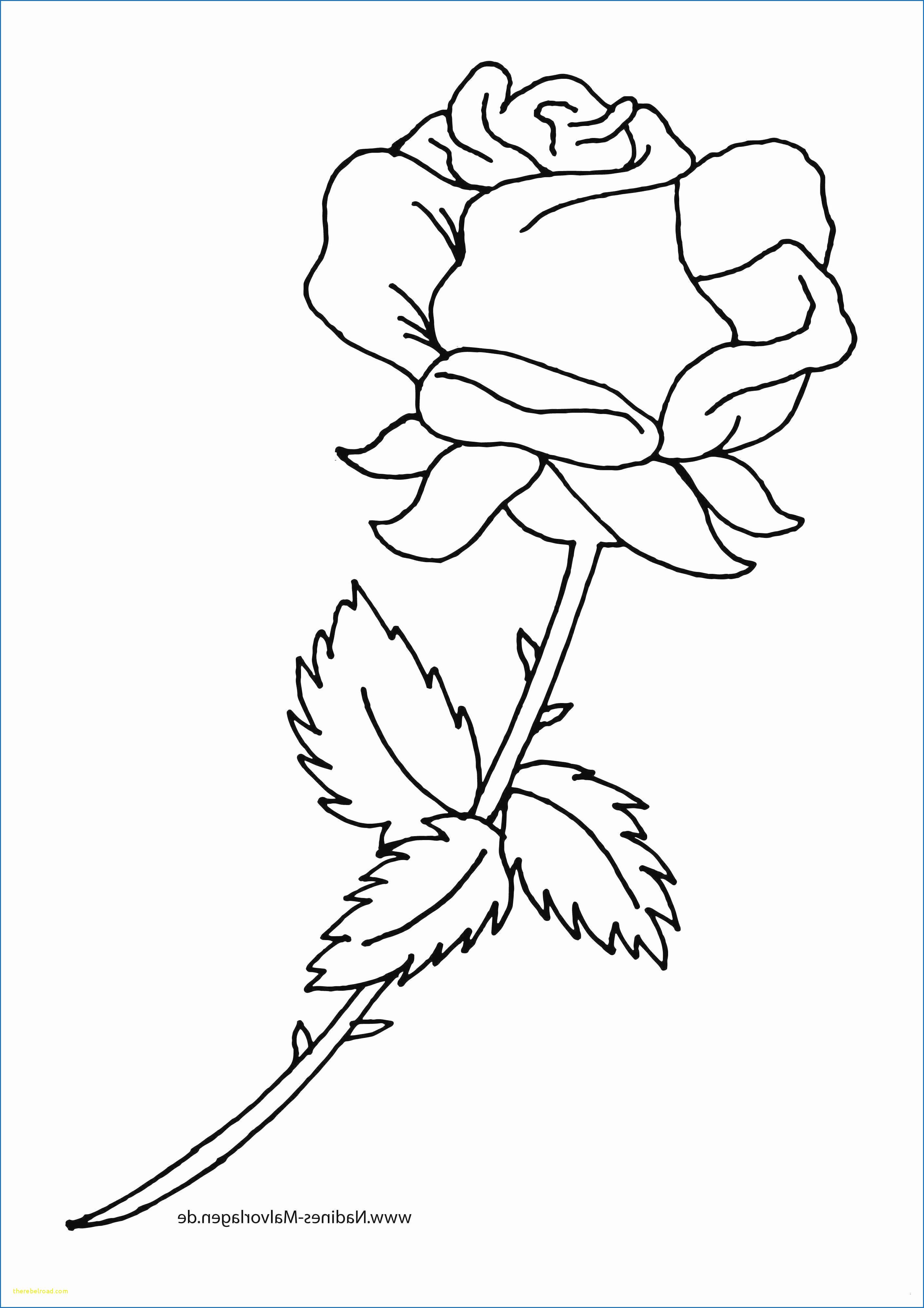 Ausmalbilder Rosen Mit Herz Neu Ausmalbilder Rosen Bilder