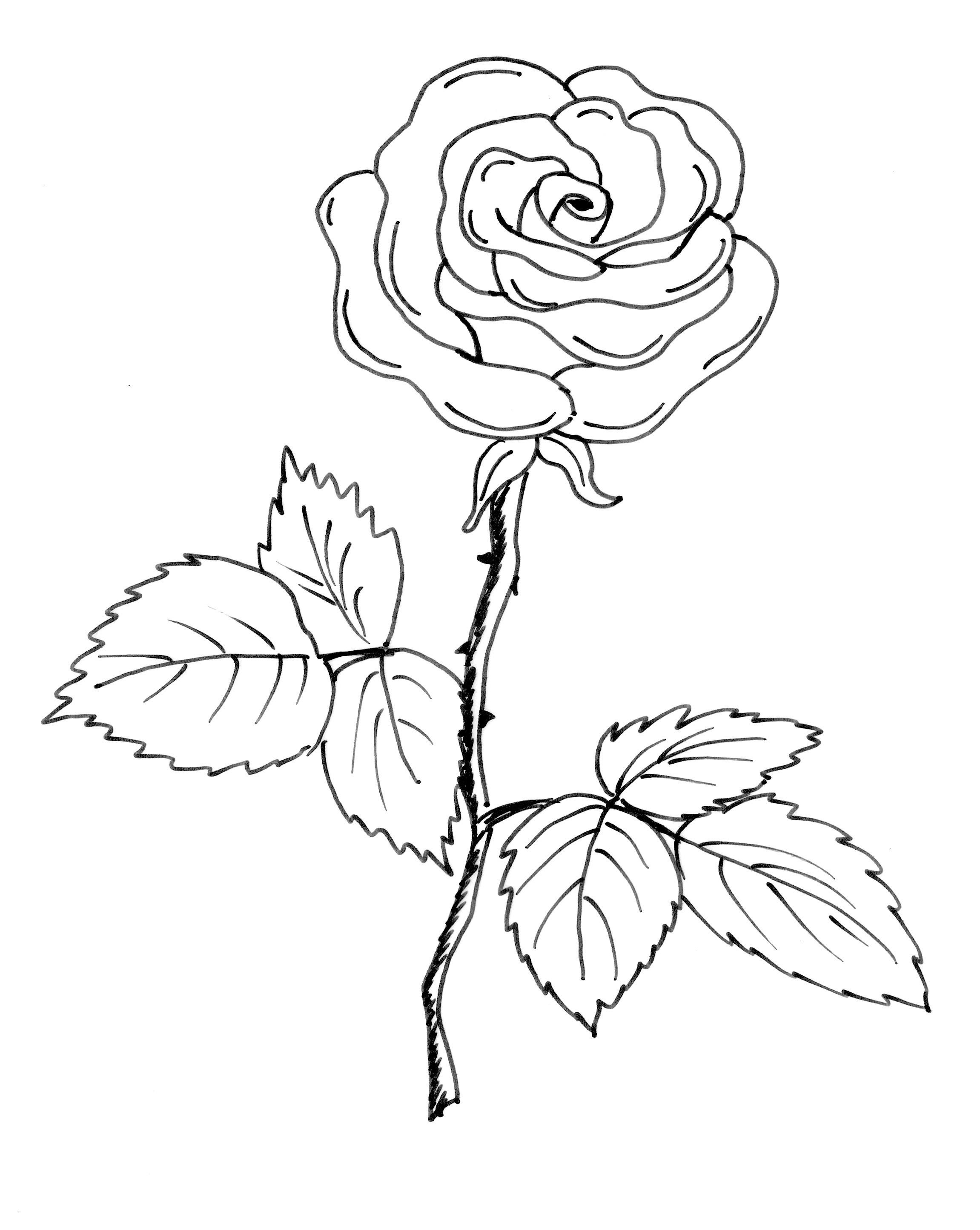 Ausmalbilder Rosen Mit Herz Neu Bilder Zum Ausmalen Rosen élégant Graphie Rose Ausmalbild Fotografieren