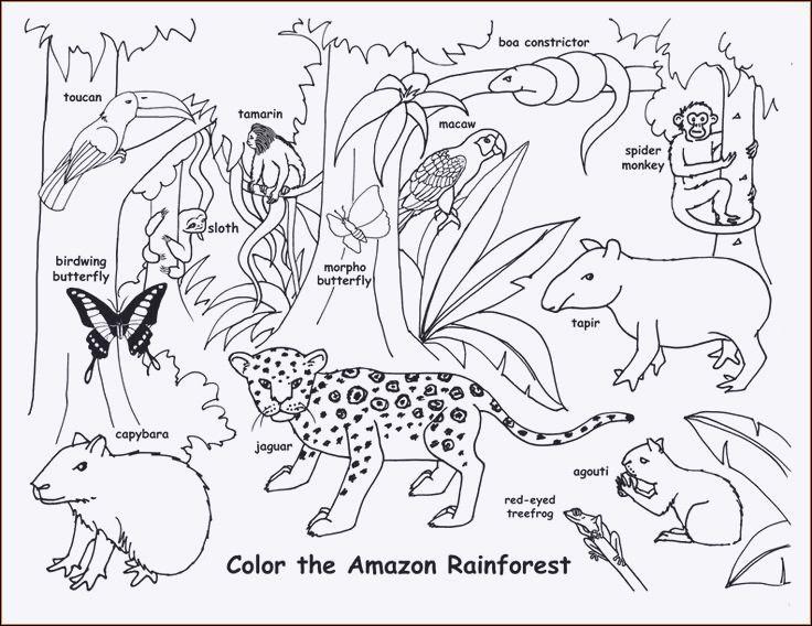 Ausmalbilder Tiere Im Dschungel Einzigartig Ausmalbilder Tiere Regenwald Fotografieren