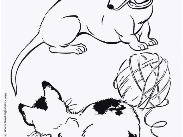 Ausmalbilder Tiere Im Dschungel Genial 14 Kostenlose Mandalas Kostenloses Ausmalbild Hund Schnauzer Die Sammlung