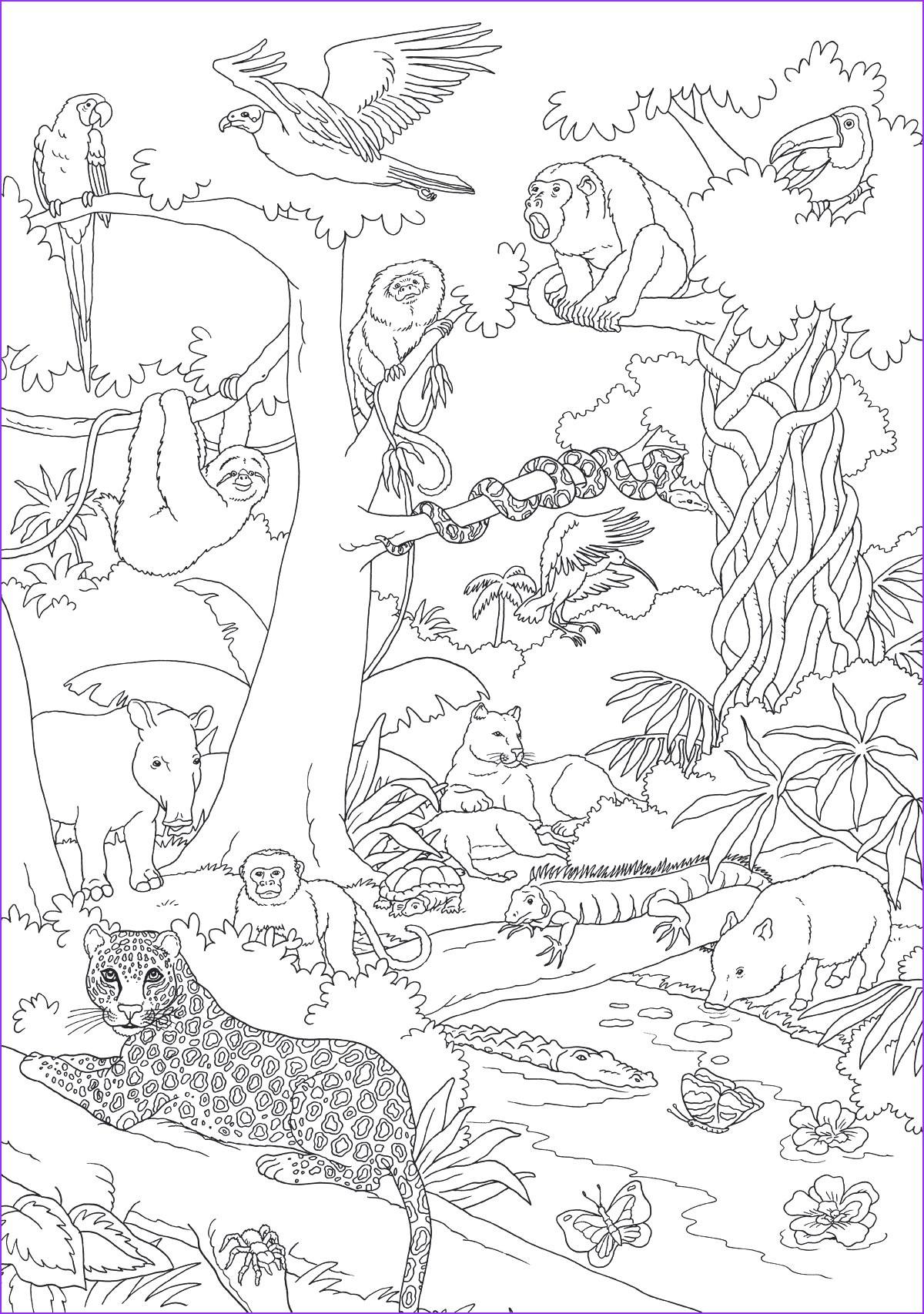 Ausmalbilder Tiere Im Dschungel Genial 60 Ausmalbilder Tiere Urwald Design Ideen Regenwald Tiere Und Galerie