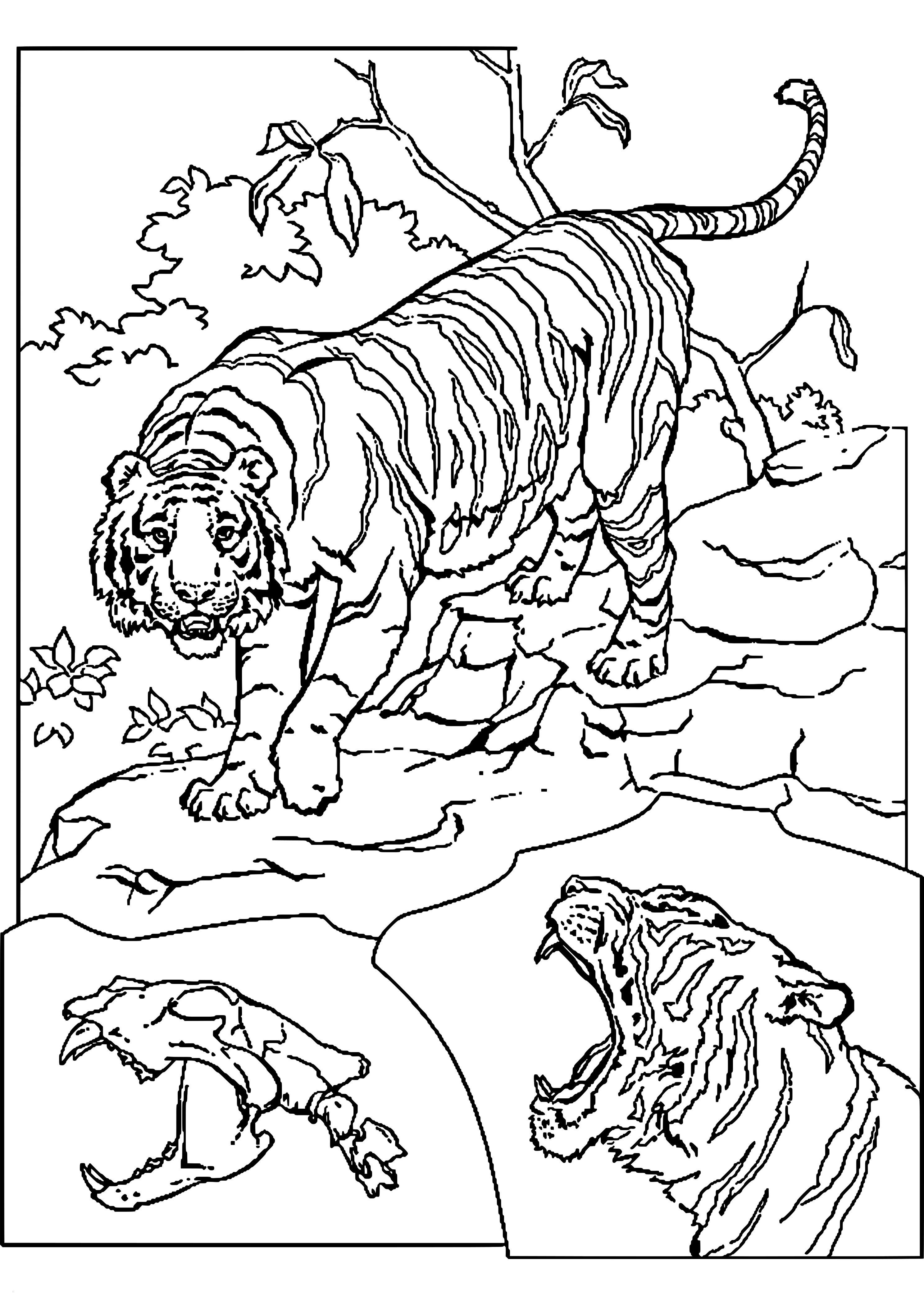Ausmalbilder Tiere Im Dschungel Neu Bilder Zum Ausmalen Tiere Meilleur De Collection Bilder Tiere Zum Stock